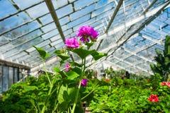 Invernadero del jardín agribusiness fotos de archivo