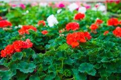 Invernadero del jardín agribusiness imagen de archivo