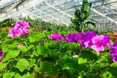 Invernadero del jardín agribusiness foto de archivo libre de regalías