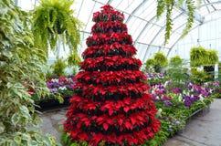 Invernadero del jardín botánico de Christchurch - Nueva Zelanda foto de archivo libre de regalías