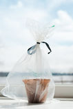 Invernadero del plantador de la ventana foto de archivo libre de regalías