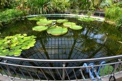 Invernadero en el jardín botánico de Cluj imagen de archivo