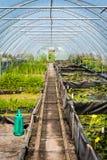 Invernadero grande, cuarto de niños de la planta, centro de jardín Foto de archivo libre de regalías