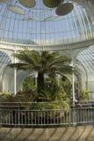 Invernadero hermoso en Glasgow Botanic Gardens Imágenes de archivo libres de regalías