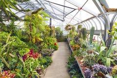 Invernadero interior Imagen de archivo