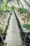 Invernadero interior con los diversos cactus, tema que cultiva un huerto Foto de archivo libre de regalías