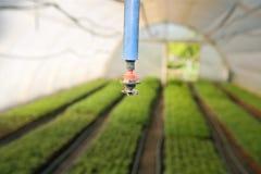 Invernadero para las verduras - irrigación foto de archivo