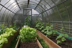 Invernadero para los tomates y los pepinos crecientes Imágenes de archivo libres de regalías