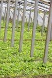 Invernadero vegetal Fotografía de archivo