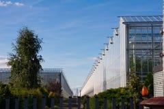 Invernadero y arbustos en una plantación fotos de archivo