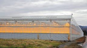 Invernadero y luz del sol artificial Imagen de archivo