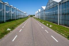 Invernaderos en ambos lados del camino en los Países Bajos imagen de archivo libre de regalías
