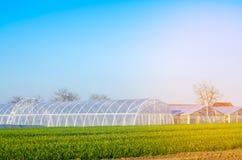 Invernaderos en el campo para los almácigos de las cosechas, frutas, verduras, prestando a los granjeros, tierras de labrantío, a foto de archivo libre de regalías