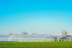 Invernaderos en el campo para los almácigos de las cosechas, frutas, verduras, prestando a los granjeros, tierras de labrantío, a fotos de archivo libres de regalías