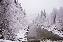 Inverno Árvore na neve Imagens de Stock Royalty Free