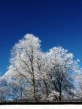 Inverno-árvores Fotografia de Stock Royalty Free