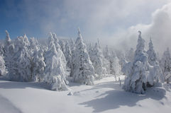 Inverno - árvores snow-covered Fotos de Stock