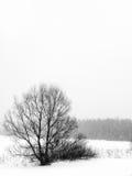 Inverno. Árvores. Uma queda de neve. Imagem de Stock Royalty Free