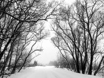 Inverno. Árvores. Uma queda de neve. Imagem de Stock