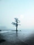 inverno - única árvore Imagens de Stock Royalty Free