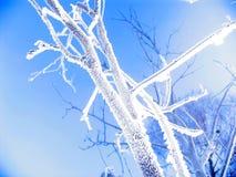 Inverno Imagens de Stock Royalty Free
