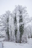 Inverno Fotografie Stock Libere da Diritti