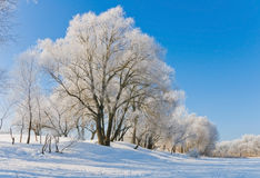 inverno Foto de Stock Royalty Free