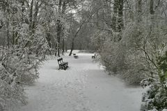 Inverno 39 Imagens de Stock Royalty Free