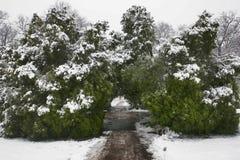 Inverno 41 Fotografia de Stock Royalty Free