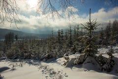 Inverno, Fotografia Stock Libera da Diritti