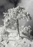 Inverno, Immagine Stock Libera da Diritti