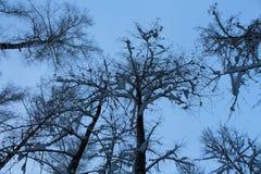 Inverno Fotografia de Stock
