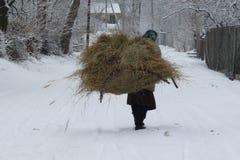 Inverno Fotos de Stock Royalty Free