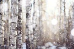 inverno adiantado com neve Imagens de Stock