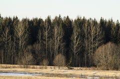 inverno adiantado nos campos Fotos de Stock Royalty Free
