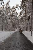 Inverno al parco Fotografia Stock