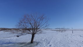 Inverno Albero solo su un campo vuoto Fotografie Stock