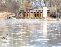 Inverno allo stagno del nord Fotografie Stock Libere da Diritti