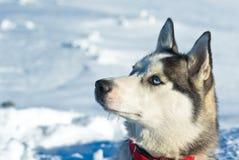 Inverno in alpi francesi Immagine Stock