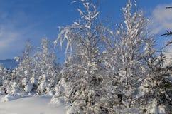Inverno in alto Tatras Fotografie Stock