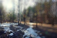 Inverno in anticipo del fondo in foresta Fotografie Stock Libere da Diritti