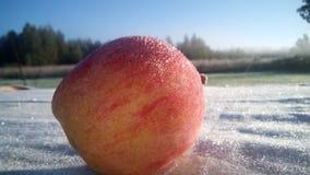 Inverno Apple Imagem de Stock Royalty Free
