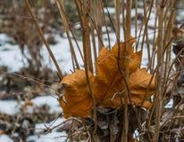 inverno atrasado da natureza Fotos de Stock