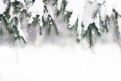 Inverno background Ramo de árvore do abeto coberto com a neve no dia de inverno imagens de stock royalty free