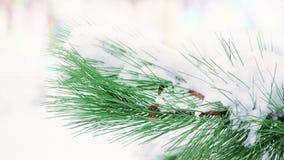Inverno background Ramo di albero dell'abete coperto di neve nel giorno di inverno fotografie stock