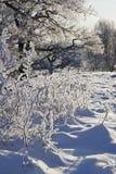Inverno backlit Immagini Stock