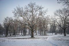 Inverno a Belgrado fotografia stock