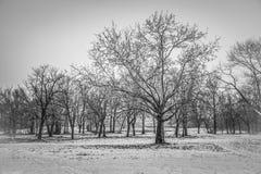 Inverno a Belgrado immagine stock