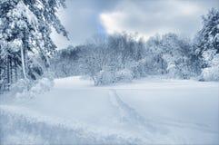 Inverno bello immagine stock