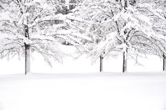 Inverno bianco fotografia stock